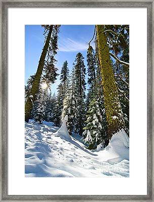 Winter Wonderland Of Badger Pass In Yosemite National Park Framed Print by Jamie Pham