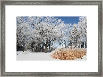 Winter Wonderland Framed Print by Robyn Saunders
