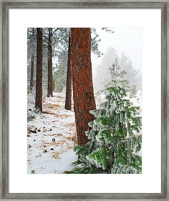 Winter Woodland Pine Tree Framed Print by Julie Magers Soulen