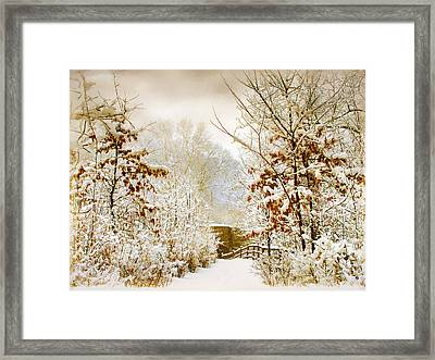 Winter Woods Framed Print by Jessica Jenney