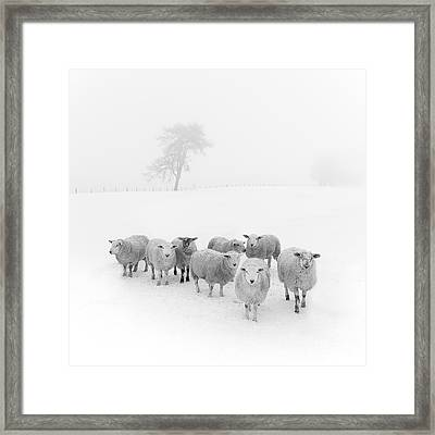 Winter Woollies Framed Print by Janet Burdon