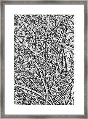 Winters Branches Framed Print by John Haldane
