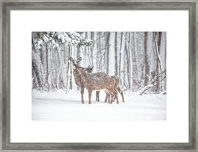 Winters Love Framed Print by Karol Livote