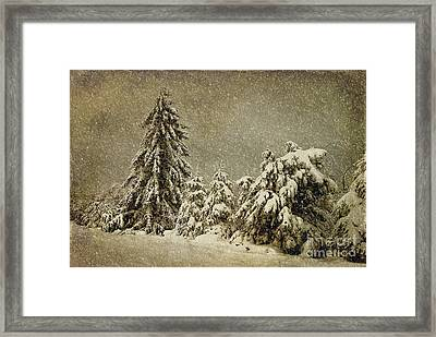 Winter's Wrath Framed Print by Lois Bryan