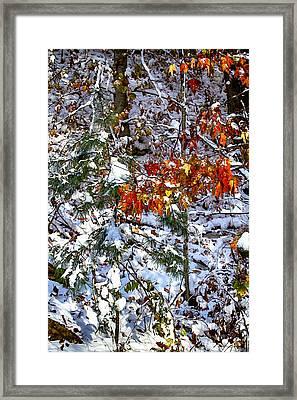 Wintry Mix Framed Print by John Haldane