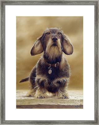 Wire Haired Dachshund Framed Print by John Silver