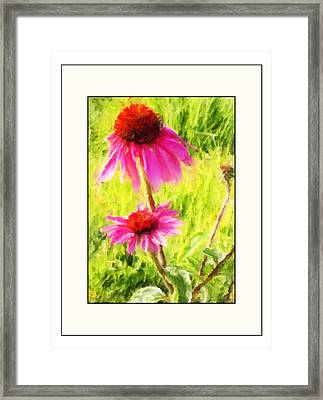 Wisconsin Cone Flowers Framed Print by Kelly Gibson