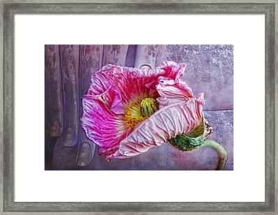 Wisdom And Beauty Framed Print by Joachim G Pinkawa