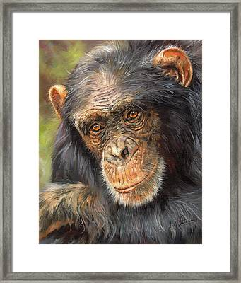Wise Eyes Framed Print by David Stribbling