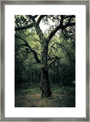 Wise Old Tree Framed Print by Robin Lewis