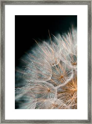 Wishing For Tomorrow Framed Print by Jan Bickerton