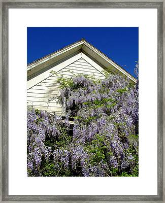 Wisteria Cascading Framed Print by Everett Bowers