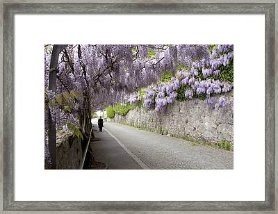 Wisteria Lane Framed Print by Colleen Williams