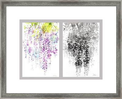 Wisteria Framed Print by Sumiyo Toribe