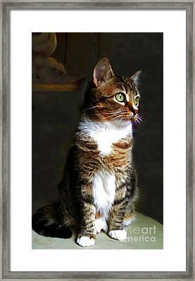 Wistful  Framed Print by Diana Besser