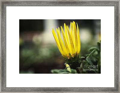 With Exuberance Beauty Framed Print by Max Cohen