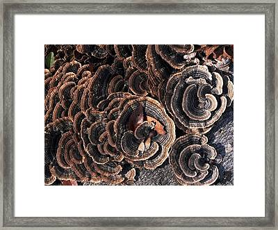 With Love - Grounded Framed Print by Theresa  Asher
