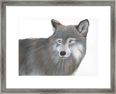 Wolf 6 21 2014 Framed Print by Minnie Lippiatt