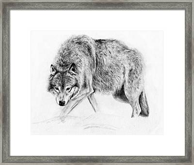 Wolf Framed Print by Anna Shell