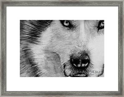 Wolf Framed Print by Bill Richards