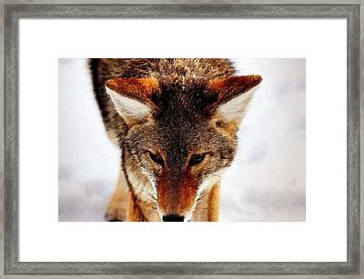 Wolf In The Wild Framed Print by Florian Rodarte