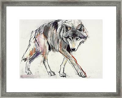 Wolf  Framed Print by Mark Adlington