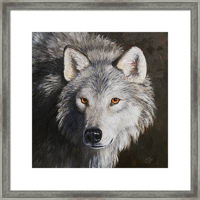 Wolf Portrait Framed Print by Crista Forest