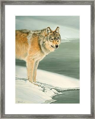 Wolf Portrait-lamar Valley  Framed Print by Paul Krapf