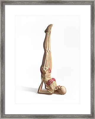 Woman Doing Gymnastics On The Floor Framed Print by Leonello Calvetti