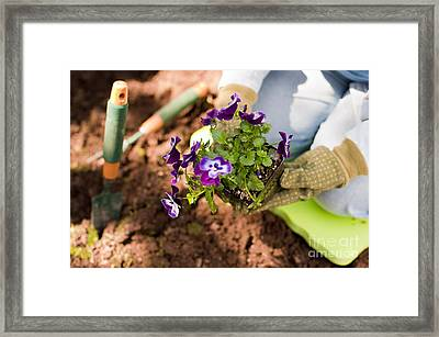 Woman Gardening Framed Print by Jim Corwin