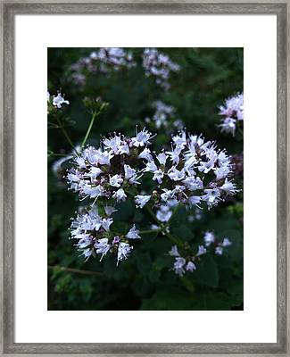 Wonder Of Nature Framed Print by Lucy D