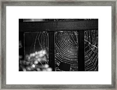Wonder Web Framed Print by Carrie Ann Grippo-Pike