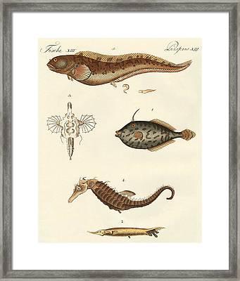 Wonderful Fish Framed Print by German School