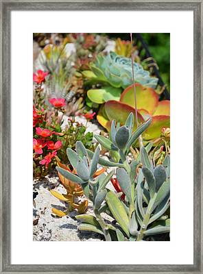 Wonderful Succulent Plants 2 Framed Print by Lanjee Chee