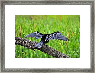 Wonderful Wings Framed Print by Al Powell Photography USA