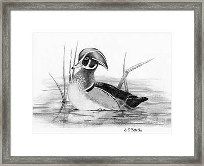 Wood Duck In Pond Framed Print by Sarah Batalka