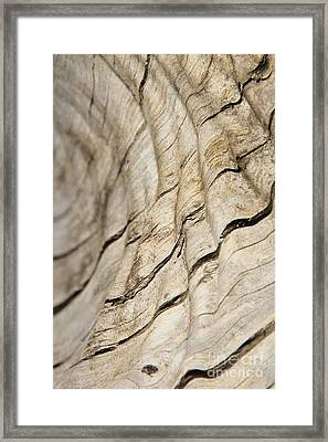 Wood Grain Grunge And Texture Framed Print by Hermanus A Alberts