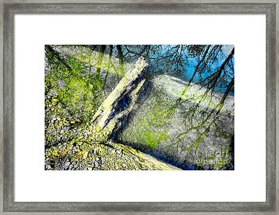 Wood Reflections Framed Print by Olivier Le Queinec