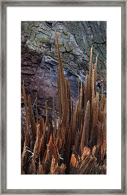 Wood Shreds Framed Print by Murray Bloom