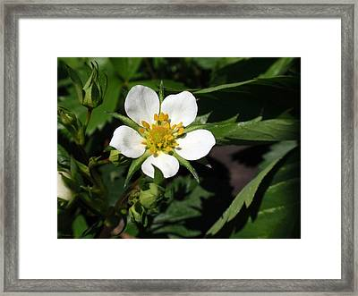 Wood Strawberry Framed Print by Christina Rollo
