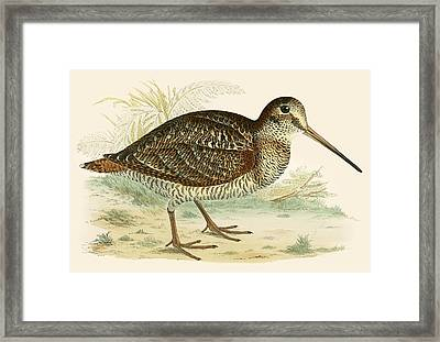 Woodcock Framed Print by Beverley R Morris