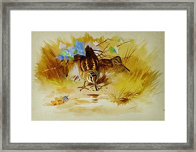 Woodcock In A Sandy Hollow Framed Print by Celestial Images