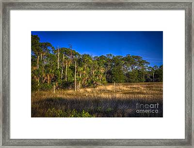 Woodland And Marsh Framed Print by Marvin Spates