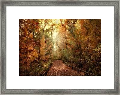 Woodland Light Framed Print by Jessica Jenney