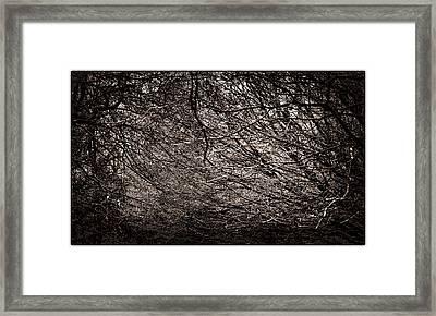 Woodland Mass Framed Print by Lenny Carter