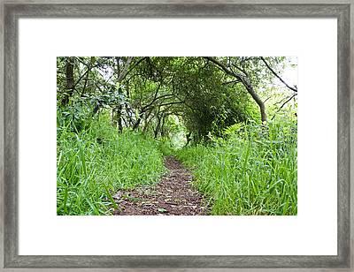 Woodland Pathway Framed Print by Tom Gowanlock