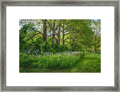 Woodland Phlox   Framed Print by Steve Harrington