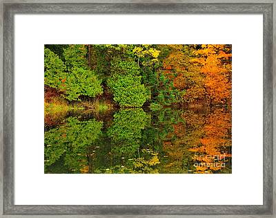 Woodland Reflection Framed Print by Terri Gostola