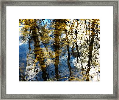 Woodland Reflections Framed Print by Shawna Rowe