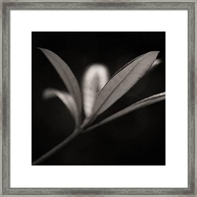Woodland - Study 6 Framed Print by Dave Bowman